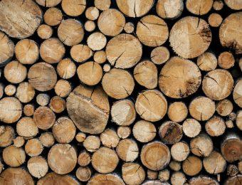 Quali sono i tipi di legno più costosi?